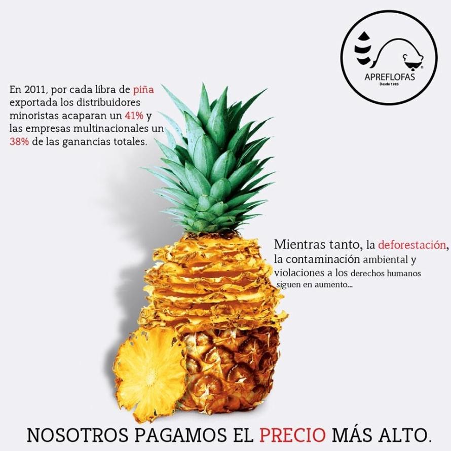 PIÑA.jpg